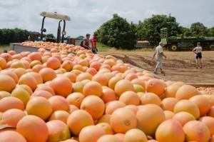 Citrus packhouse