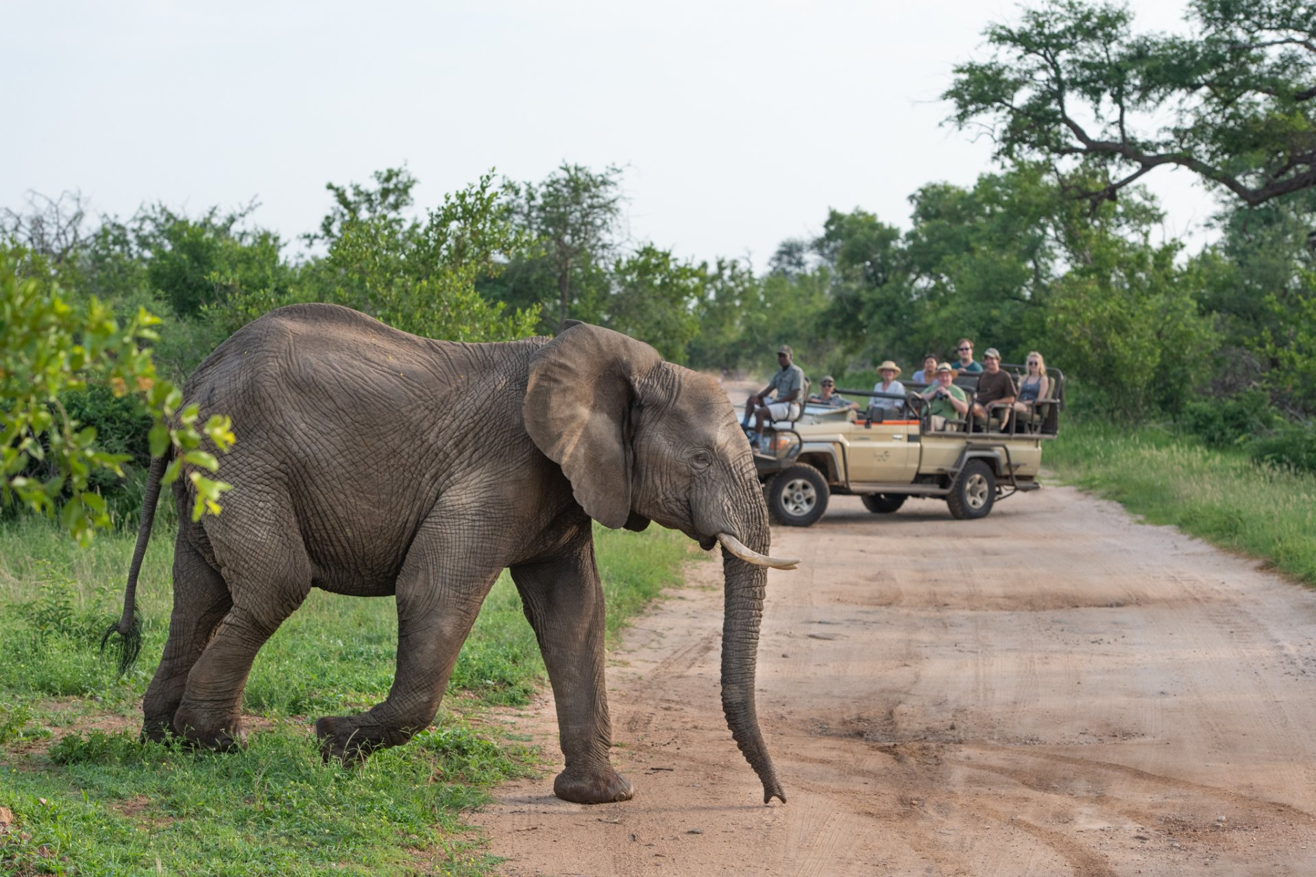 Sausage Tree Camp game drive elephant