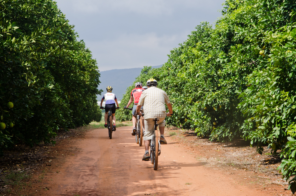 Cycling through Orange groves
